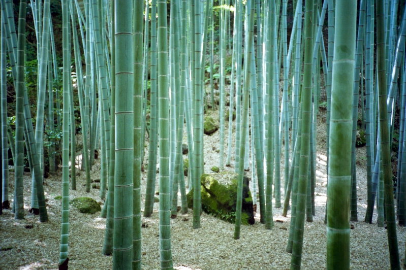 The Bamboo forest in Houkokuji